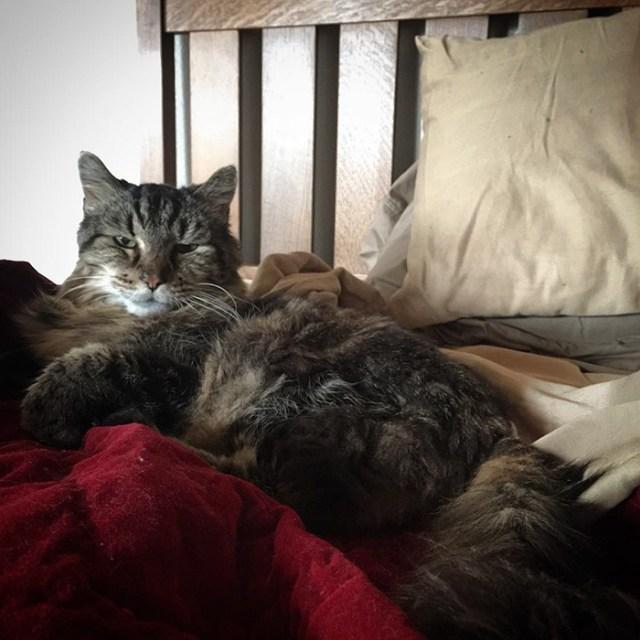 record-gato-viejo-mundo-corduroy (4)