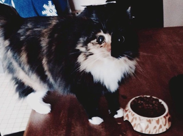 gato-ciego-quimera-adoptado-jasmine-sandra-coudray (6)