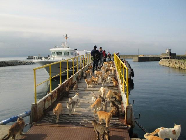 isla-gatos-aoshima-donaciones-comida-japon (1)