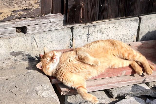 isla-gatos-aoshima-donaciones-comida-japon (8)