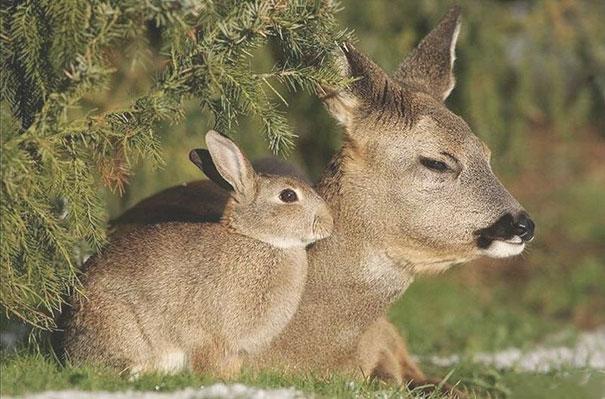 animales-hermanos-distintas-madres (3)