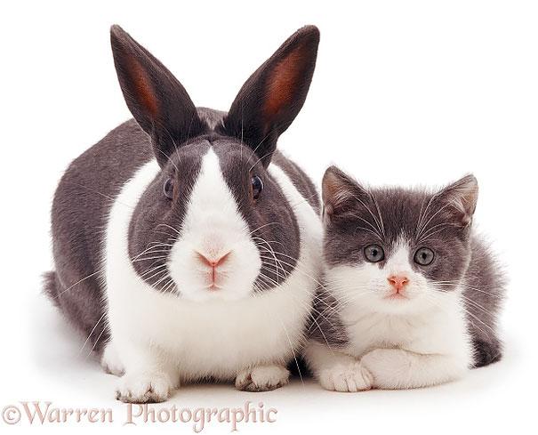animales-hermanos-distintas-madres (4)