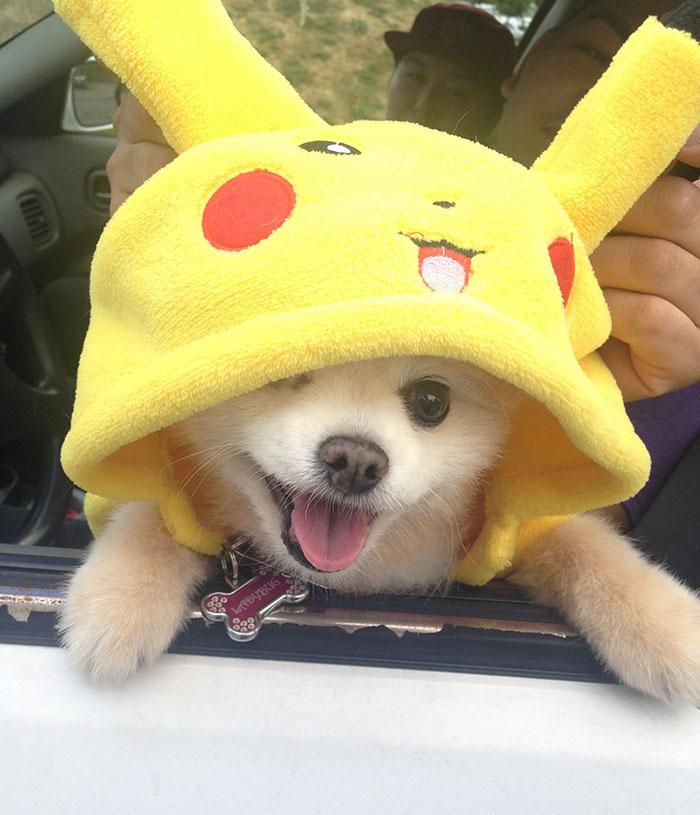 refugio-animal-paseo-perros-pokemon-go (1)