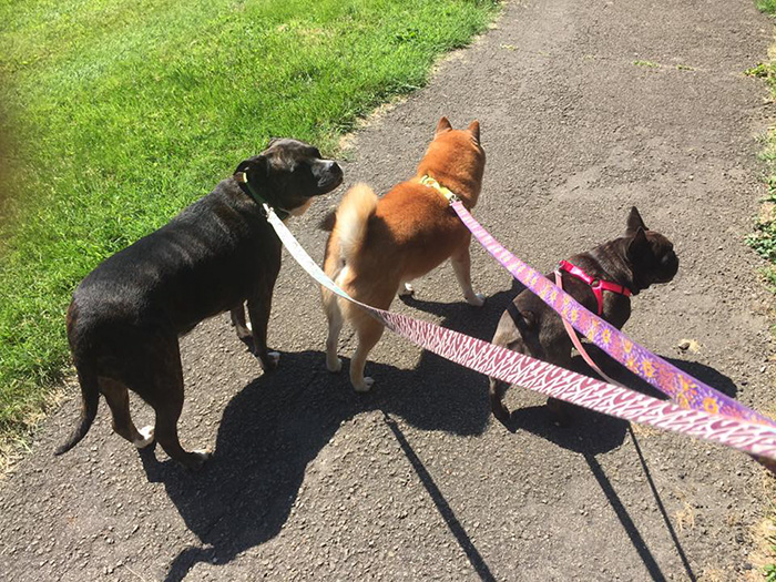 refugio-animal-paseo-perros-pokemon-go (2)