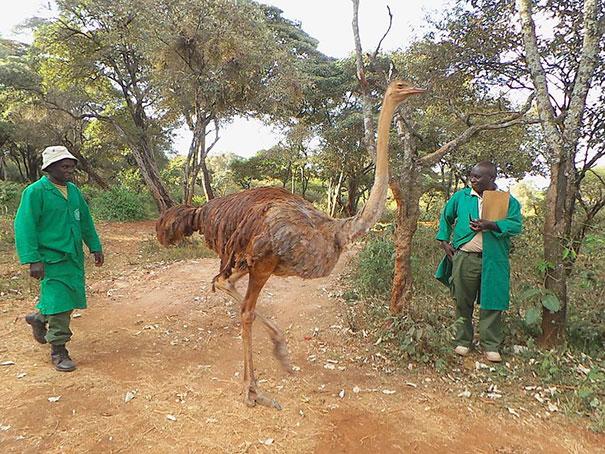 amistad-animales-huerfanos-avestruz-elefante (4)