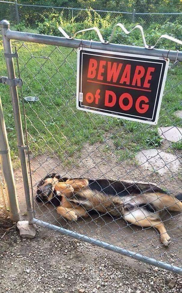 cuidado-con-el-perro (4)