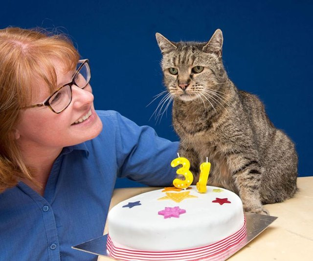 gato-viejo-31-anos-nutmeg (8)