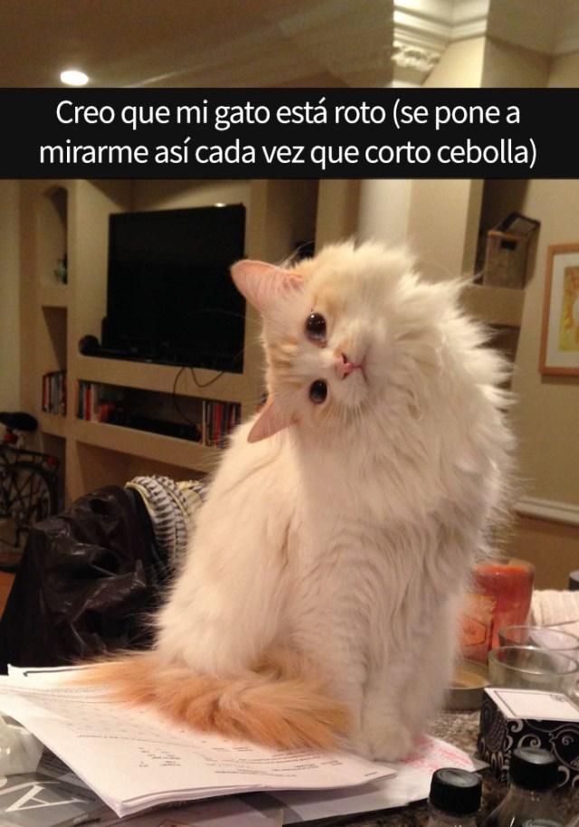 gatos-snapchat-15