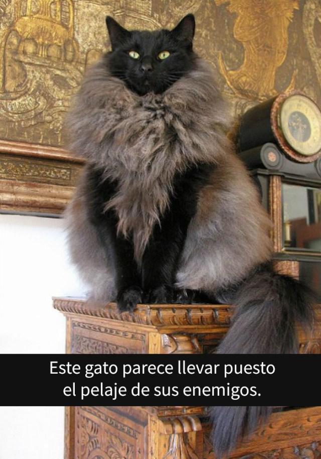 gatos-snapchat-5