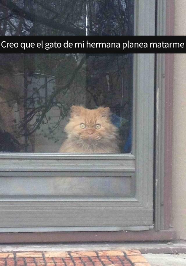 gatos-snapchat-6