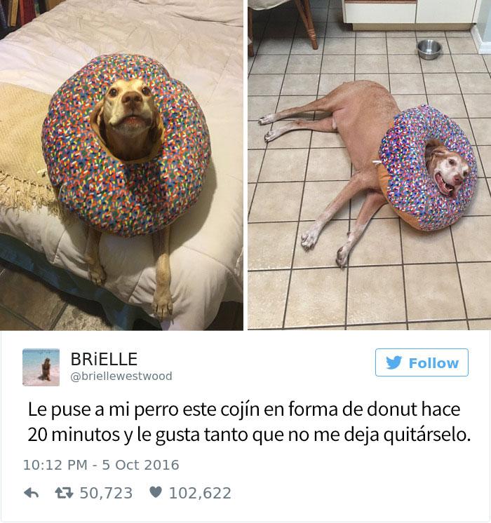 tuits-perros-11