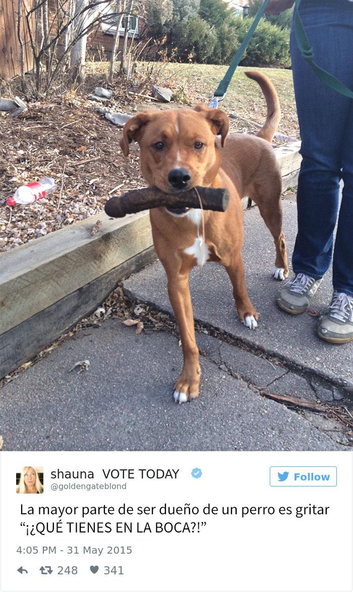 tuits-perros-5