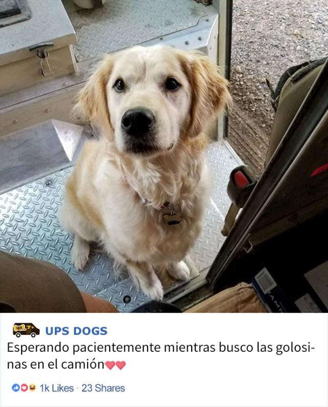 perros-ups-10