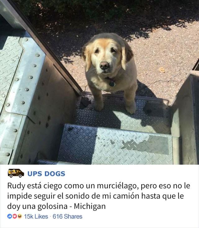 perros-ups-4