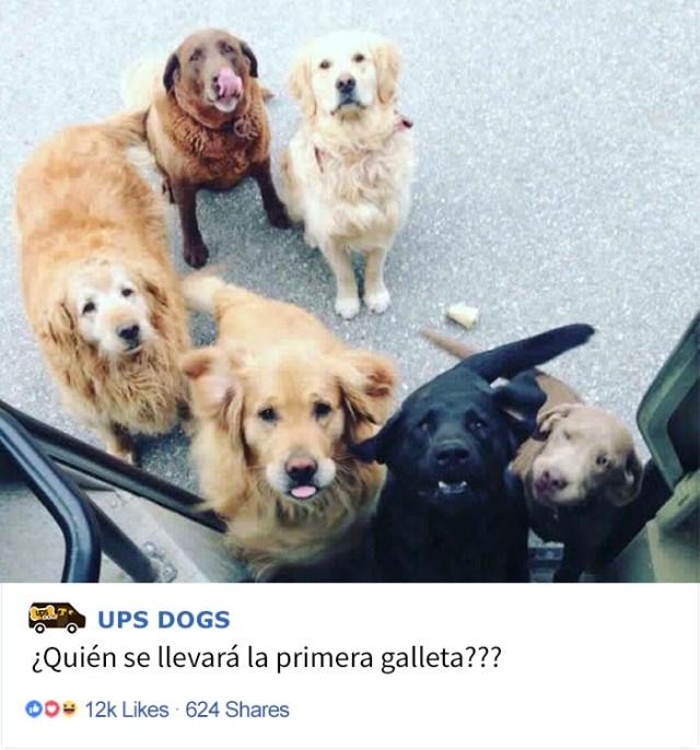 perros-ups-6