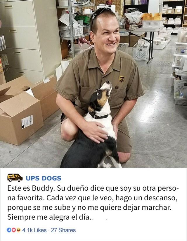 perros-ups-7