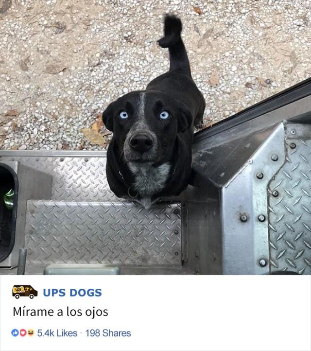 perros-ups-9