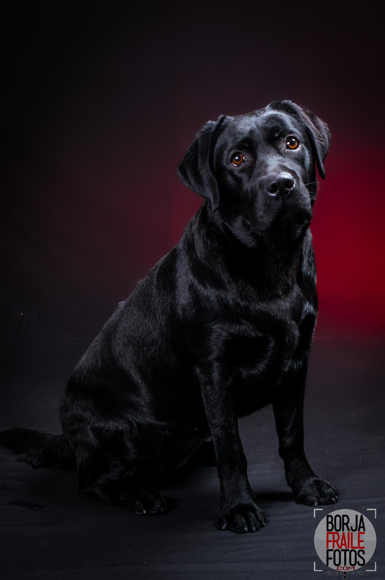 20210102panceta023ps - Panceta, perra modelo... fotos de perros.