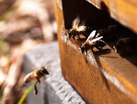 Bier ved flyvesprækken