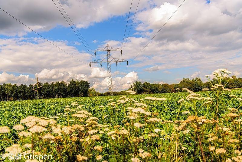 De natuur zo dicht bij huis in ons mooie #born #borninbeeld #limburginbeeld #limburg #liefdevoorlimburg zicht op #nedcar
