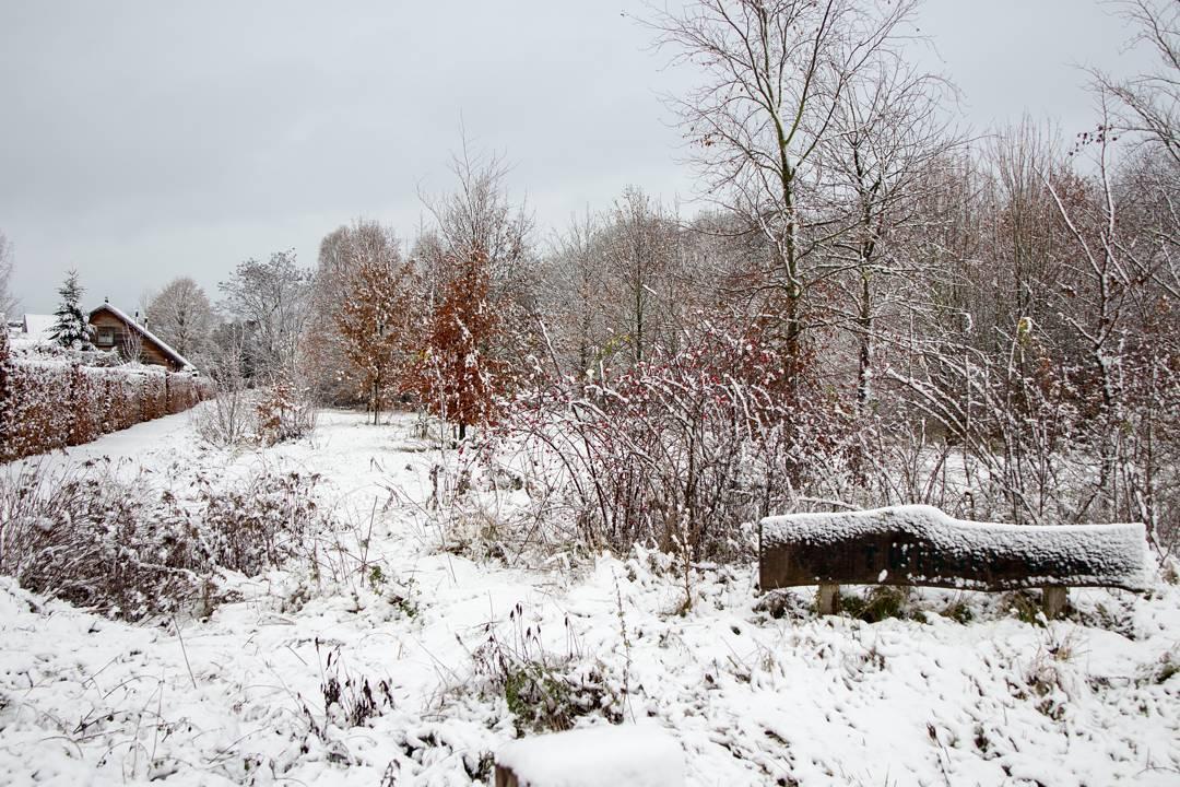 Het wisselwoud in de sneeuw #born #borninbeeld #wissel #wisselwoud #limburg #winter #sneeuw