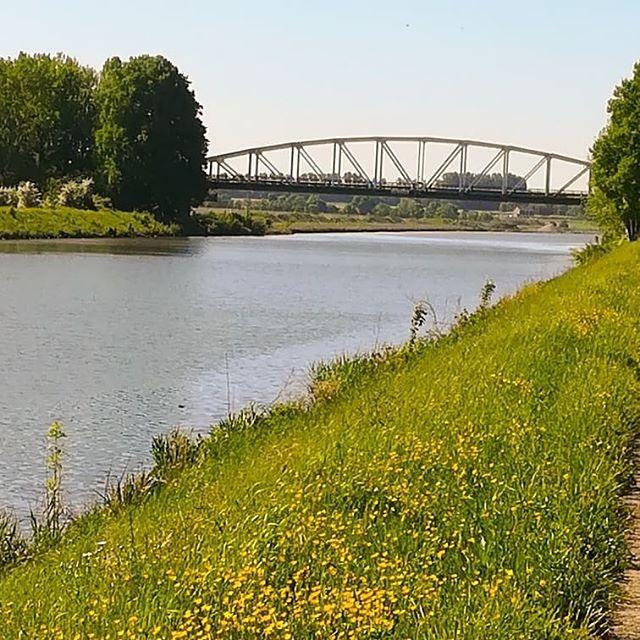 Een heerlijke wandeling gemaakt over de kanaaldijk in Obbicht  #born #borninbeeld #limburg #liefdevoorlimburg #kanaaldijk #obbicht #visitlimburg