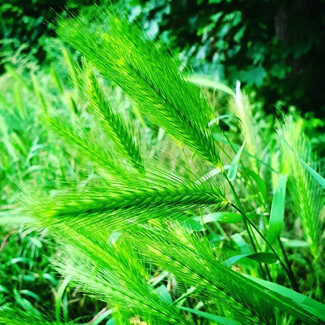 Het is #groen wat de klok slaat in het #limbrichterbos #Limbricht #born #borninbeeld #liefdevoorlimburg #limburg