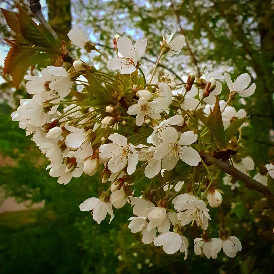 #lente in #Born #borninbeeld #limburg #liefdevoorlimburg