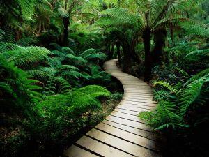 stockvault-path-in-nature124348