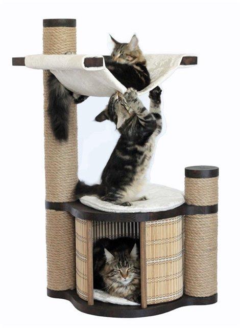 faktor yang mempengaruhi kesehatan kucing