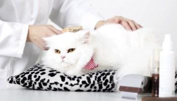 cat_care_1-700x400.jpg