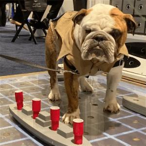 Sea-Air-Space Dog Playing Battleship