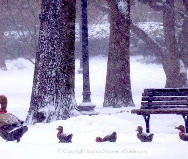 Make Way For Ducklings Statues In Bostons Public Garden During A January Snowstorm