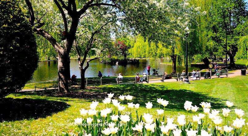 Image result for the boston public garden