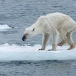 Climate Change Depression, Climate Grief & Climate Despair