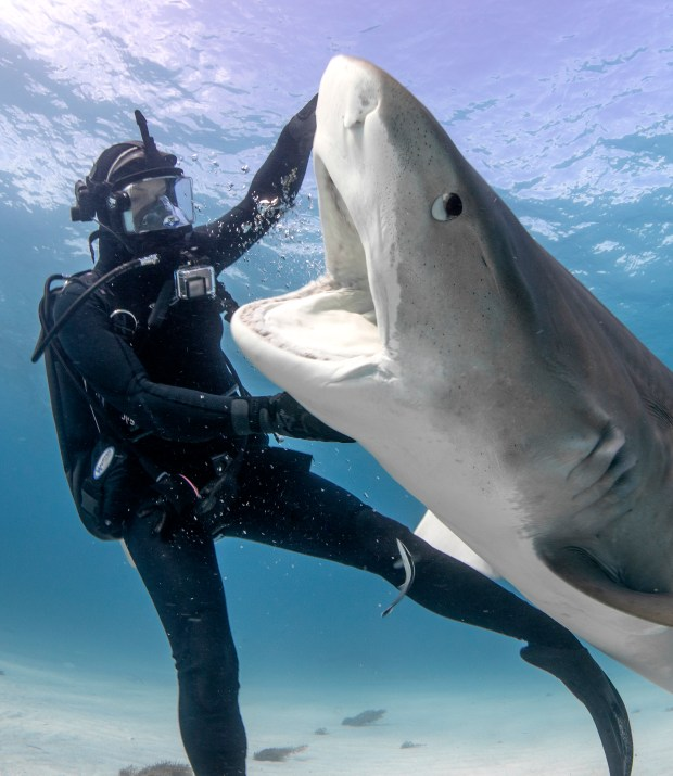 Shark Week returns on Discovery Channel