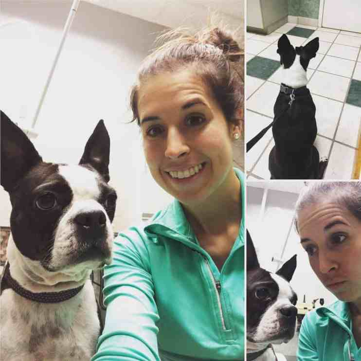How to Choose a good Veterinarian for your Dog. Choosing a Veterinarian Boston Terrier Society.