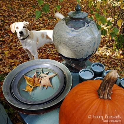 DSC04689-2sq-pottery-dog-bostree-sugar-loaf-ny-wm