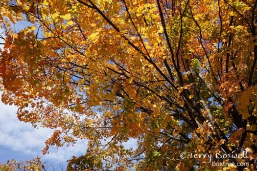 DSC04971-2-fall-leaves-terry-boswell-wm