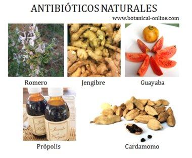 https://i1.wp.com/www.botanical-online.com/material/antibioticos_naturales.jpg