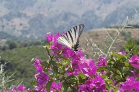 Botanical Park-Gardens of Crete- Colourful Butterflies