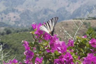 Βοτανικό Πάρκο- Κήποι Κρήτης: Πεταλούδες στο πάρκο.