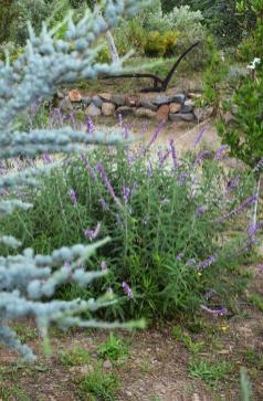 Βοτανικό Πάρκο- Κήποι Κρήτης: Βότανα