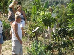 Βοτανικό Πάρκο- Κήποι Κρήτης: Τροπικά Δέντρα από όλο τον κόσμο