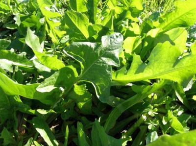 Άγρια Χόρτα Κρήτης: Κρητική Διατροφή- Βοτανικό Πάρκο & Κήποι Κρήτης