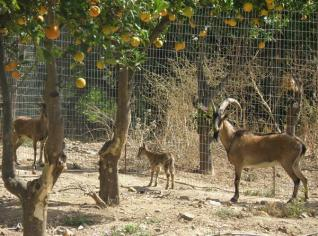 Botanical Park-Gardens of Crete- Our Animal Farm- Kri Kri