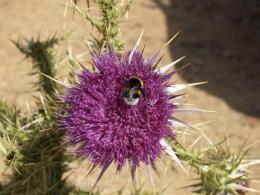 Botanical Park-Gardens of Crete- Bees Polinating
