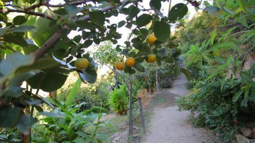 Botanical Park-Gardens of Crete: Citrus Trees