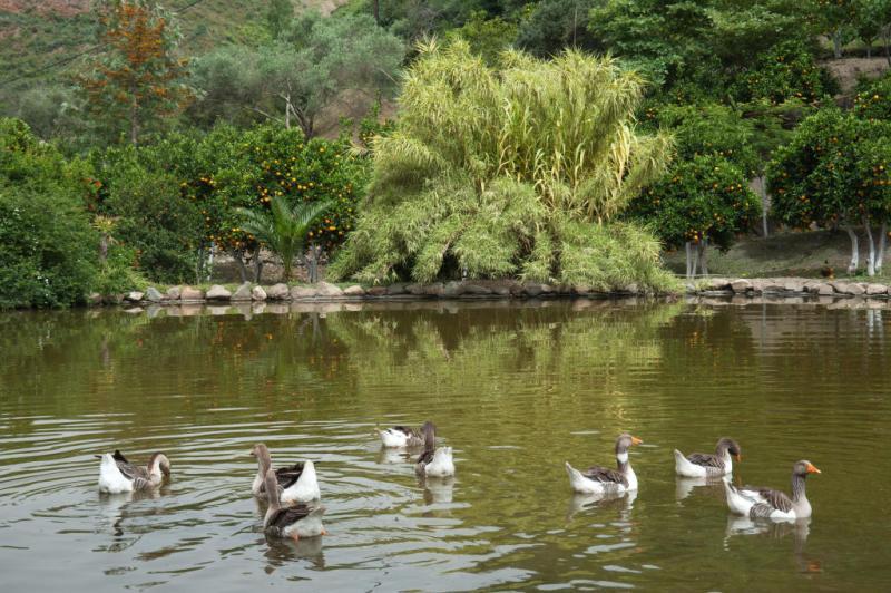 Botanical Park & Gardens of Crete: Family of ducks on our Lake