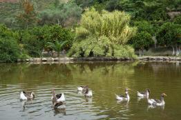 Λίμνη στην Κρήτη: Βοτανικό Πάρκο και Κήποι Κρήτης
